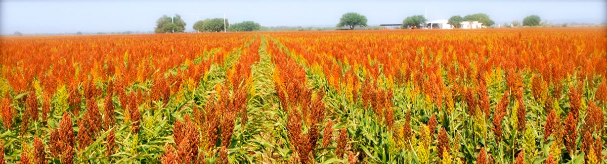 agricultura_slide